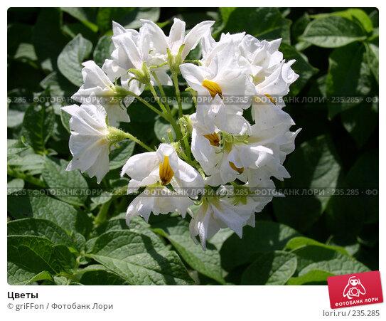 Купить «Цветы», фото № 235285, снято 21 апреля 2018 г. (c) griFFon / Фотобанк Лори