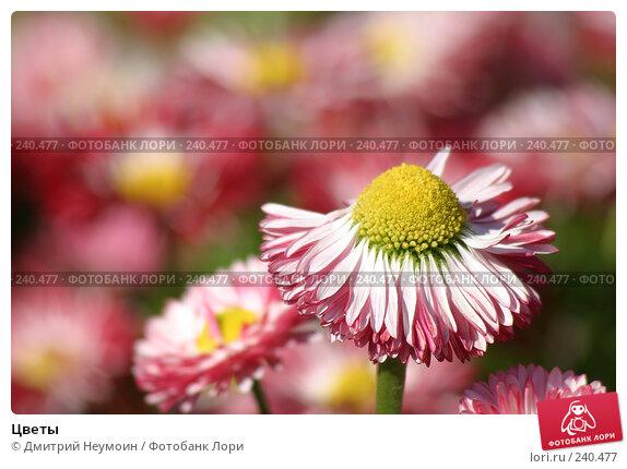 Цветы, эксклюзивное фото № 240477, снято 15 мая 2005 г. (c) Дмитрий Неумоин / Фотобанк Лори