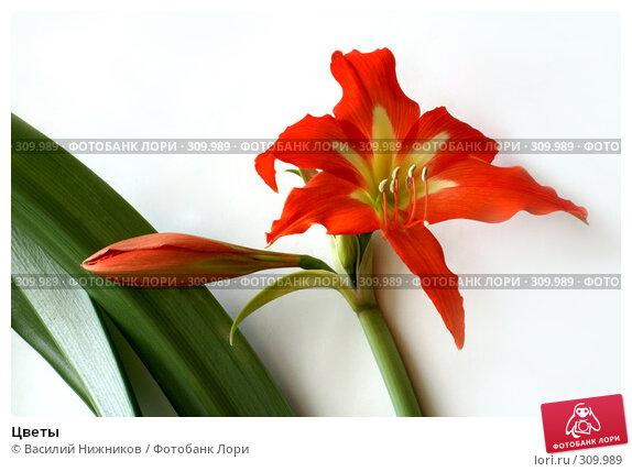 Цветы, фото № 309989, снято 21 апреля 2008 г. (c) Василий Нижников / Фотобанк Лори