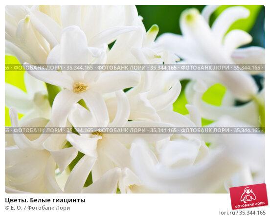 Цветы. Белые гиацинты. Стоковое фото, фотограф E. O. / Фотобанк Лори