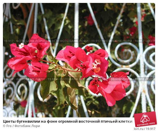 Цветы бугенвилии на фоне огромной восточной птичьей клетки, фото № 19917, снято 21 июня 2004 г. (c) Fro / Фотобанк Лори