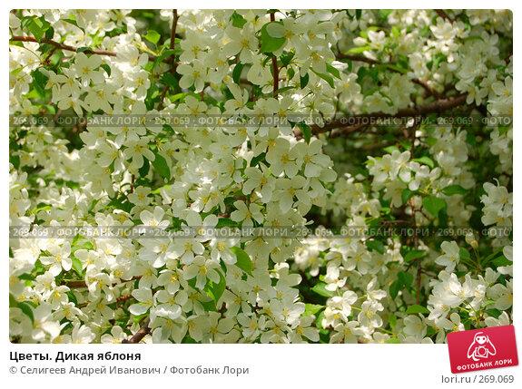 Цветы. Дикая яблоня, фото № 269069, снято 2 июня 2006 г. (c) Селигеев Андрей Иванович / Фотобанк Лори