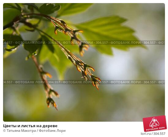 Цветы и листья на дереве, фото № 304557, снято 28 апреля 2008 г. (c) Татьяна Макотра / Фотобанк Лори