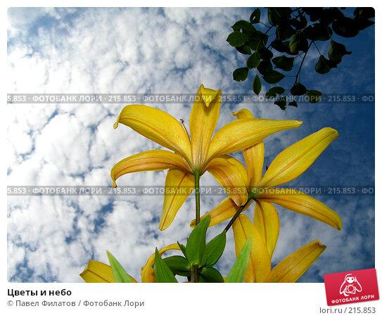Цветы и небо, фото № 215853, снято 15 июля 2007 г. (c) Павел Филатов / Фотобанк Лори
