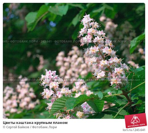 Цветы каштана крупным планом, фото № 243641, снято 24 мая 2007 г. (c) Сергей Байков / Фотобанк Лори