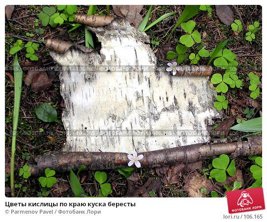 Цветы кислицы по краю куска бересты, фото № 106165, снято 23 мая 2004 г. (c) Parmenov Pavel / Фотобанк Лори
