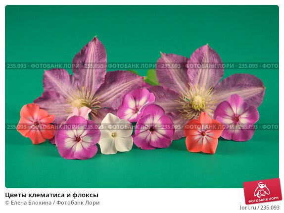 Цветы клематиса и флоксы, фото № 235093, снято 27 июля 2007 г. (c) Елена Блохина / Фотобанк Лори