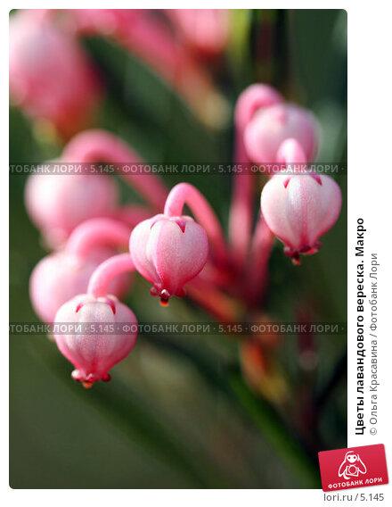 Цветы лавандового вереска. Макро, фото № 5145, снято 18 июня 2006 г. (c) Ольга Красавина / Фотобанк Лори