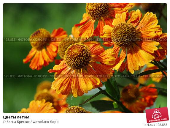 Цветы летом, фото № 128833, снято 1 сентября 2007 г. (c) Елена Бринюк / Фотобанк Лори