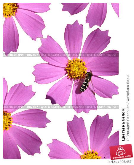 Цветы на белом, фото № 106457, снято 29 августа 2007 г. (c) Геннадий Соловьев / Фотобанк Лори