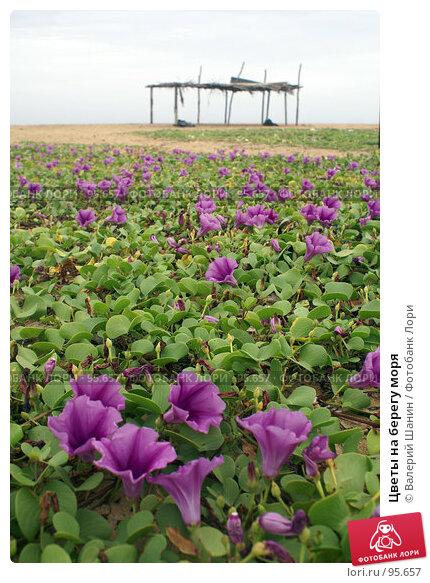 Купить «Цветы на берегу моря», фото № 95657, снято 20 июня 2007 г. (c) Валерий Шанин / Фотобанк Лори
