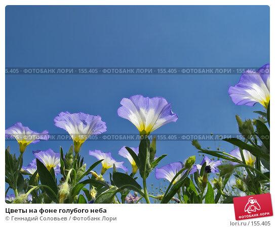 Цветы на фоне голубого неба, фото № 155405, снято 29 июля 2007 г. (c) Геннадий Соловьев / Фотобанк Лори