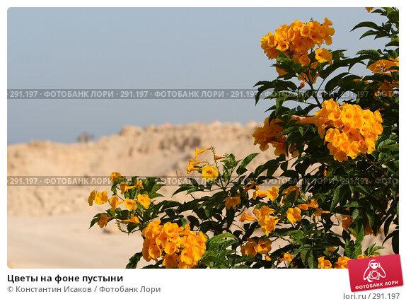 Цветы на фоне пустыни, фото № 291197, снято 8 мая 2008 г. (c) Константин Исаков / Фотобанк Лори