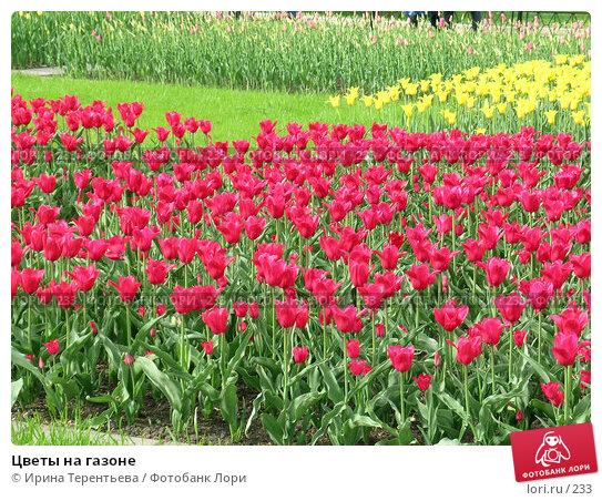 Купить «Цветы на газоне», эксклюзивное фото № 233, снято 10 мая 2004 г. (c) Ирина Терентьева / Фотобанк Лори