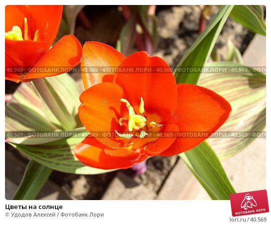 Цветы на солнце, фото № 40569, снято 18 апреля 2007 г. (c) Удодов Алексей / Фотобанк Лори