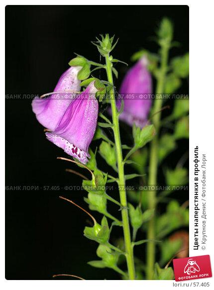 Цветы наперстянки в профиль, фото № 57405, снято 30 мая 2007 г. (c) Крупнов Денис / Фотобанк Лори