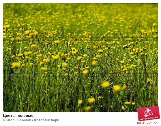 Цветы полевые, фото № 28729, снято 16 октября 2006 г. (c) Игорь Соколов / Фотобанк Лори