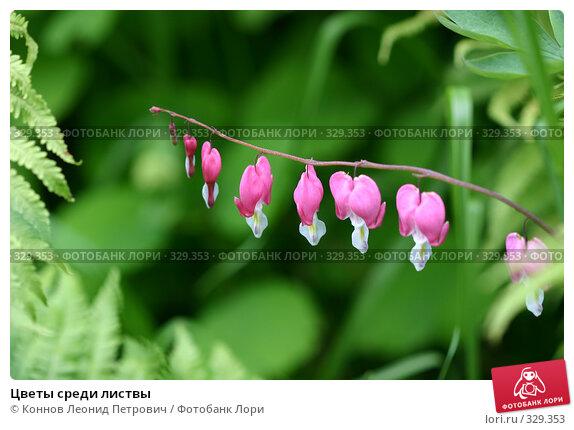 Купить «Цветы среди листвы», фото № 329353, снято 20 июня 2008 г. (c) Коннов Леонид Петрович / Фотобанк Лори