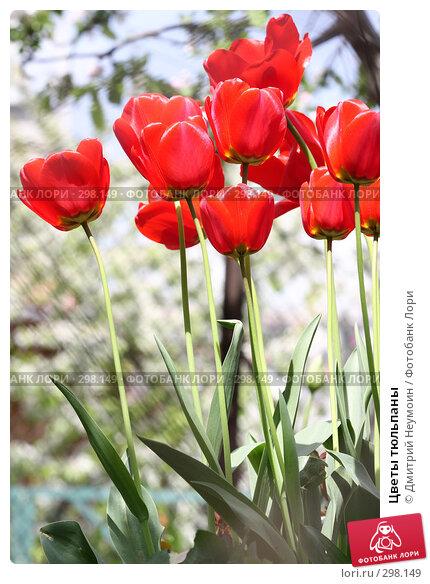 Цветы тюльпаны, эксклюзивное фото № 298149, снято 21 апреля 2008 г. (c) Дмитрий Неумоин / Фотобанк Лори