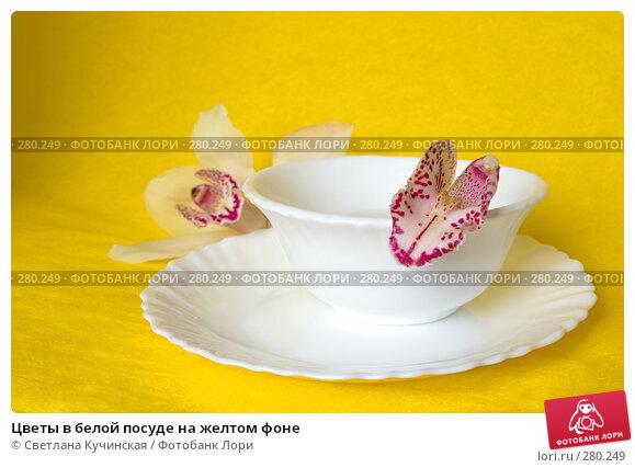 Цветы в белой посуде на желтом фоне, фото № 280249, снято 26 апреля 2017 г. (c) Светлана Кучинская / Фотобанк Лори