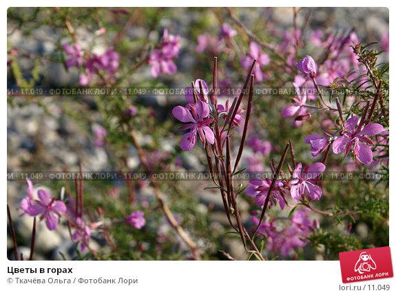 Цветы в горах, фото № 11049, снято 28 сентября 2006 г. (c) Ткачёва Ольга / Фотобанк Лори