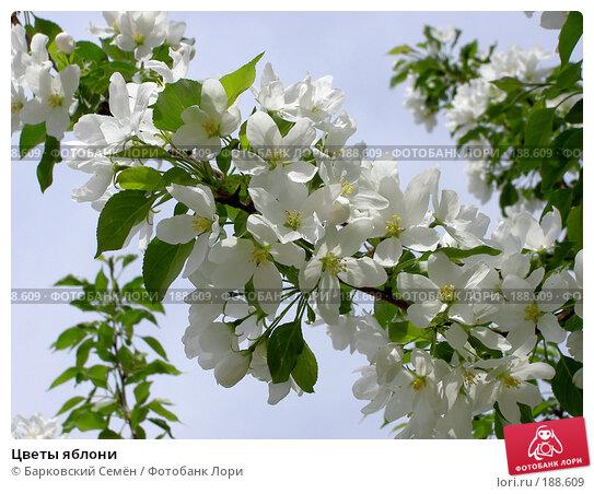 Цветы яблони, фото № 188609, снято 22 мая 2005 г. (c) Барковский Семён / Фотобанк Лори