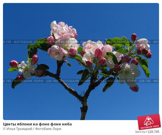 Купить «Цветы яблони на фоне фоне неба», фото № 228745, снято 14 мая 2007 г. (c) Илья Троицкий / Фотобанк Лори