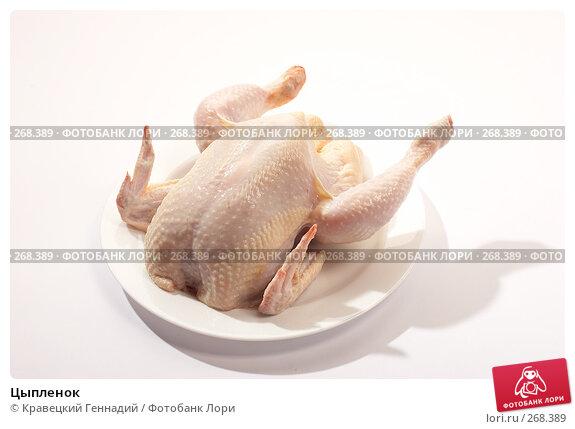 Цыпленок, фото № 268389, снято 18 сентября 2005 г. (c) Кравецкий Геннадий / Фотобанк Лори