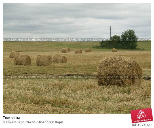 Тюк сена, эксклюзивное фото № 4129, снято 21 августа 2004 г. (c) Ирина Терентьева / Фотобанк Лори