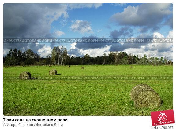Тюки сена на скошенном поле, фото № 98077, снято 28 апреля 2017 г. (c) Игорь Соколов / Фотобанк Лори