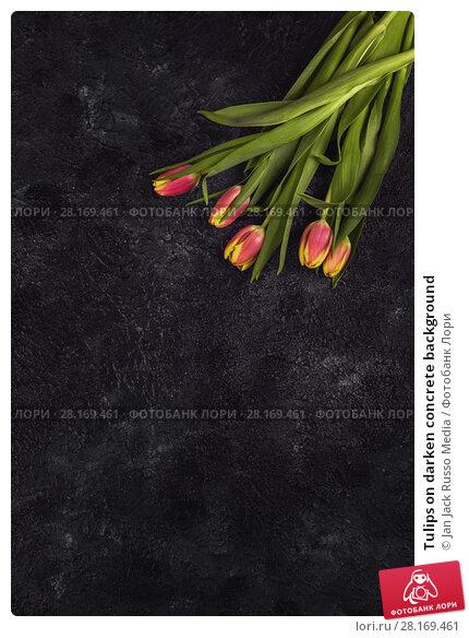 Купить «Tulips on darken concrete background», фото № 28169461, снято 2 марта 2017 г. (c) Jan Jack Russo Media / Фотобанк Лори