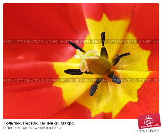 Купить «Тюльпан. Пестик. Тычинки. Макро.», фото № 219997, снято 10 мая 2006 г. (c) Петрова Ольга / Фотобанк Лори