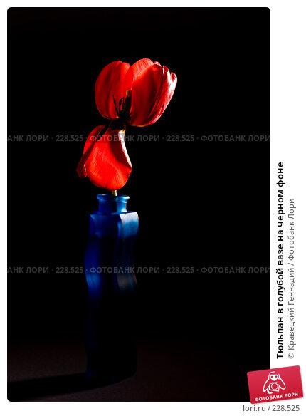 Тюльпан в голубой вазе на черном фоне, фото № 228525, снято 9 мая 2005 г. (c) Кравецкий Геннадий / Фотобанк Лори