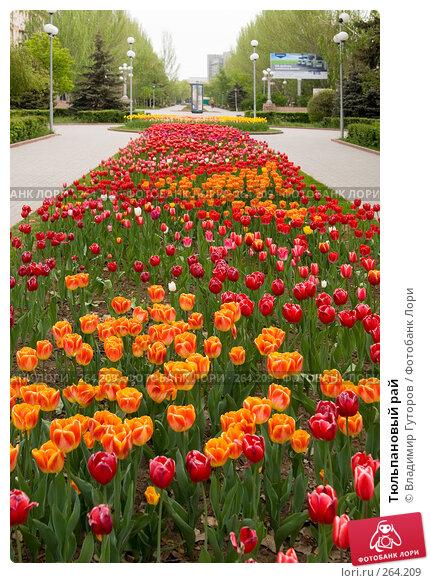 Купить «Тюльпановый рай», фото № 264209, снято 27 апреля 2008 г. (c) Владимир Гуторов / Фотобанк Лори