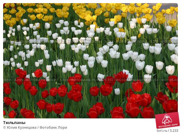 Тюльпаны, фото № 3233, снято 30 мая 2017 г. (c) Юлия Кузнецова / Фотобанк Лори