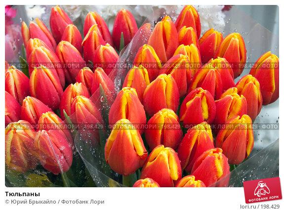Тюльпаны, фото № 198429, снято 3 февраля 2008 г. (c) Юрий Брыкайло / Фотобанк Лори