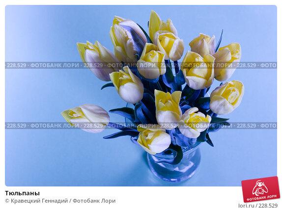 Тюльпаны, фото № 228529, снято 9 мая 2005 г. (c) Кравецкий Геннадий / Фотобанк Лори