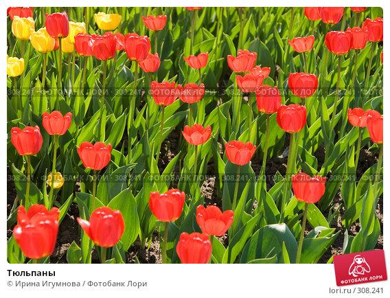 Купить «Тюльпаны», фото № 308241, снято 3 мая 2008 г. (c) Ирина Игумнова / Фотобанк Лори