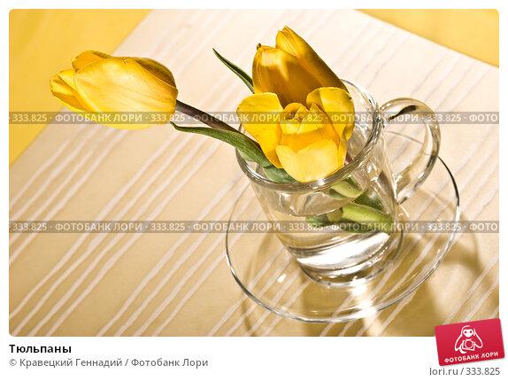 Тюльпаны, фото № 333825, снято 10 мая 2005 г. (c) Кравецкий Геннадий / Фотобанк Лори
