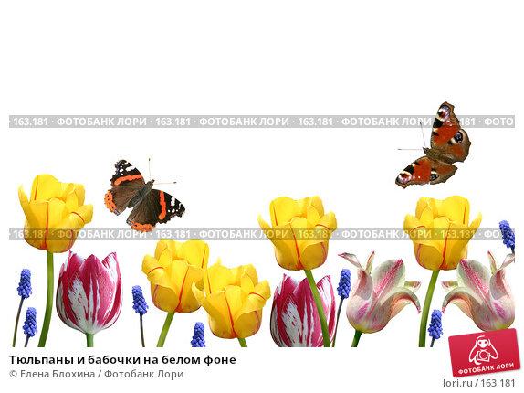 Купить «Тюльпаны и бабочки на белом фоне», фото № 163181, снято 24 апреля 2007 г. (c) Елена Блохина / Фотобанк Лори