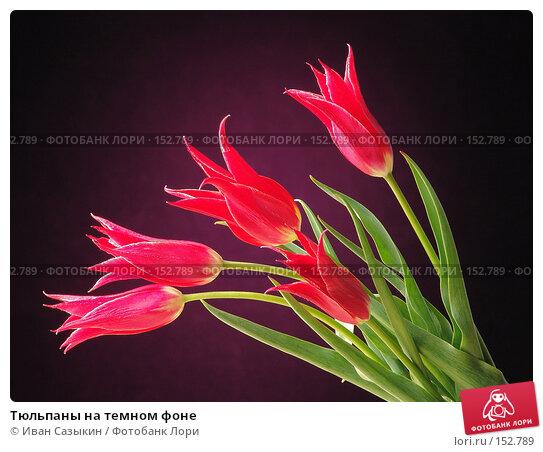 Тюльпаны на темном фоне, фото № 152789, снято 20 апреля 2004 г. (c) Иван Сазыкин / Фотобанк Лори