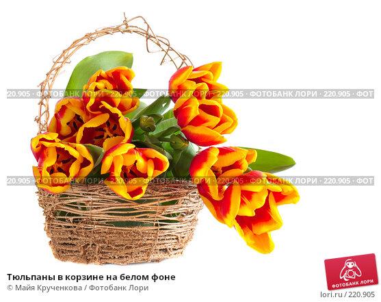 Купить «Тюльпаны в корзине на белом фоне», фото № 220905, снято 7 марта 2008 г. (c) Майя Крученкова / Фотобанк Лори