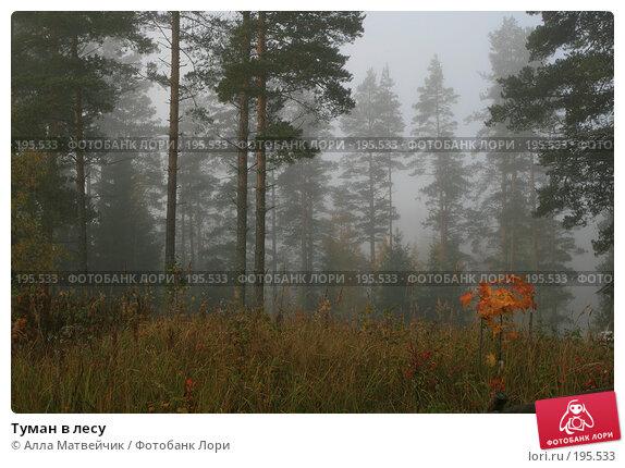 Купить «Туман в лесу», фото № 195533, снято 30 сентября 2007 г. (c) Алла Матвейчик / Фотобанк Лори