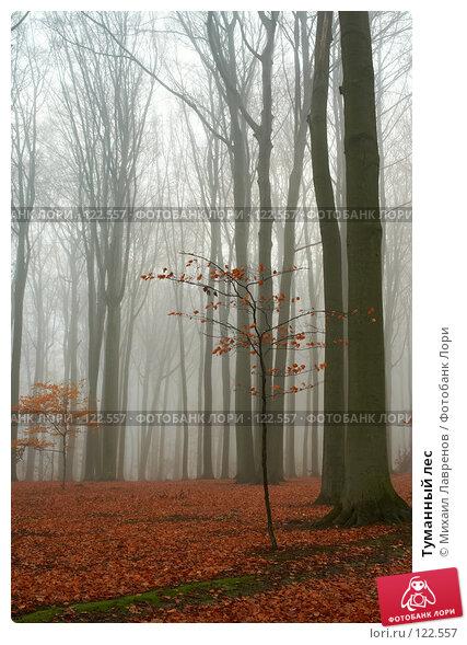 Туманный лес, фото № 122557, снято 30 ноября 2006 г. (c) Михаил Лавренов / Фотобанк Лори