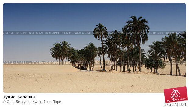 Тунис. Караван., фото № 81641, снято 30 июля 2007 г. (c) Олег Безручко / Фотобанк Лори