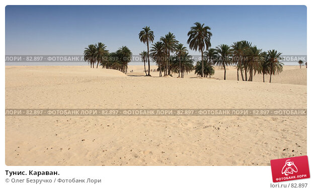 Тунис. Караван., фото № 82897, снято 30 июля 2007 г. (c) Олег Безручко / Фотобанк Лори