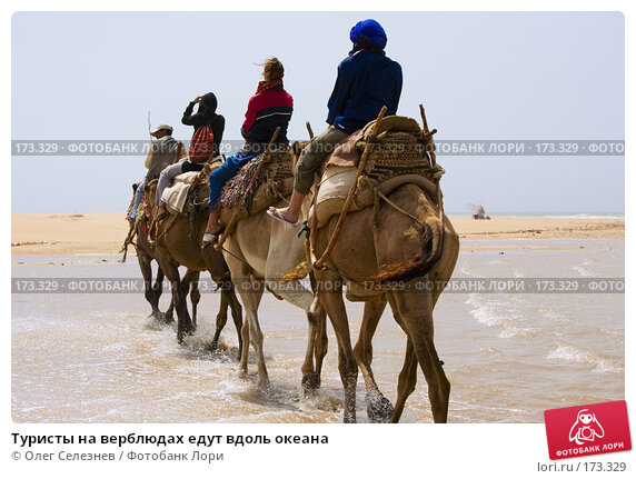 Туристы на верблюдах едут вдоль океана, фото № 173329, снято 1 августа 2007 г. (c) Олег Селезнев / Фотобанк Лори