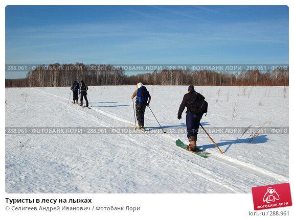 Туристы в лесу на лыжах, фото № 288961, снято 23 марта 2008 г. (c) Селигеев Андрей Иванович / Фотобанк Лори