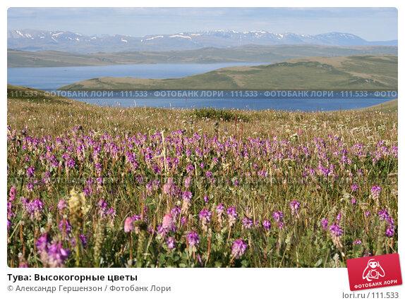 Тува: Высокогорные цветы, фото № 111533, снято 29 июля 2006 г. (c) Александр Гершензон / Фотобанк Лори