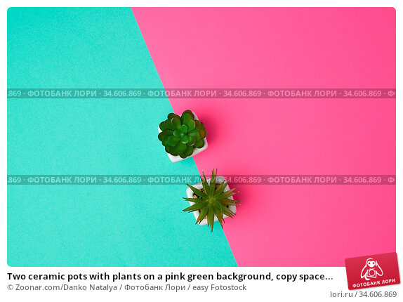 Two ceramic pots with plants on a pink green background, copy space... Стоковое фото, фотограф Zoonar.com/Danko Natalya / easy Fotostock / Фотобанк Лори
